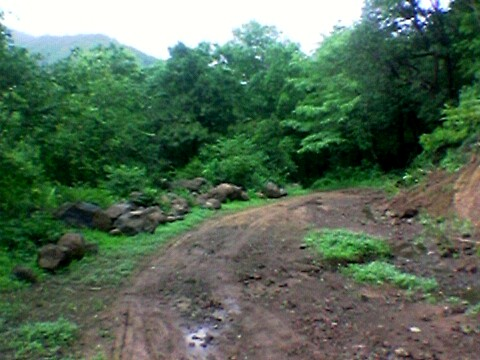 http://image3.mouthshut.com/images/ImagesR/2006/7/Tungareshwar-Wildlife-Sanctuary-925048922-5276148-1.jpg