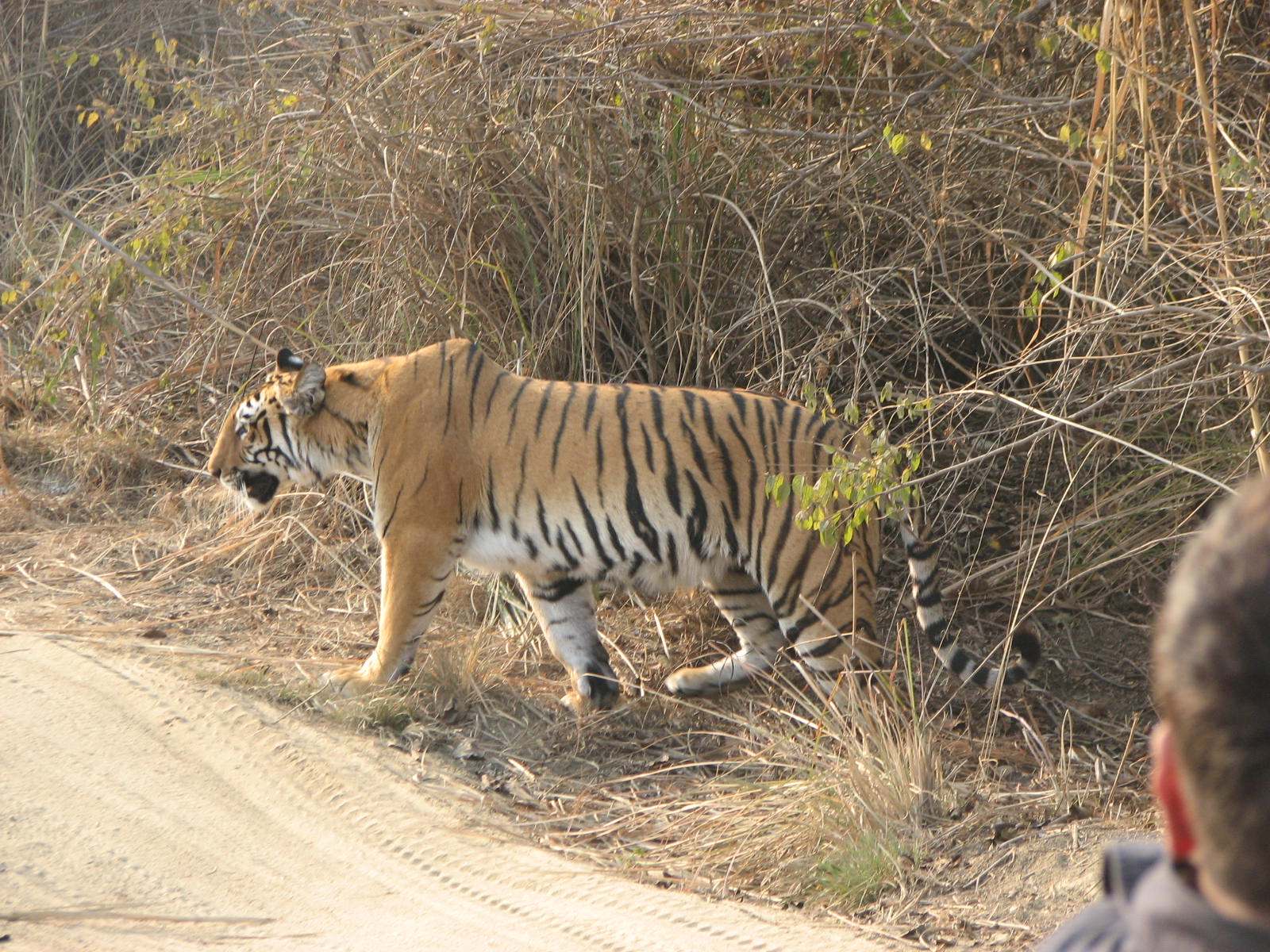 corbett tiger reserve Jim corbett national park was established in 1936, famous for tiger safaris it is best weekend getaway for families, friends, couples and corporate groups.