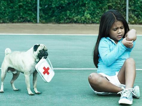 Hutch Advertisement Dog Breed