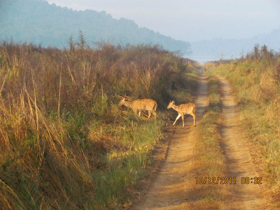 jim corbett national park tourist destinations