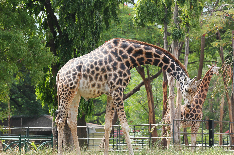 Garden City Zoo Safari