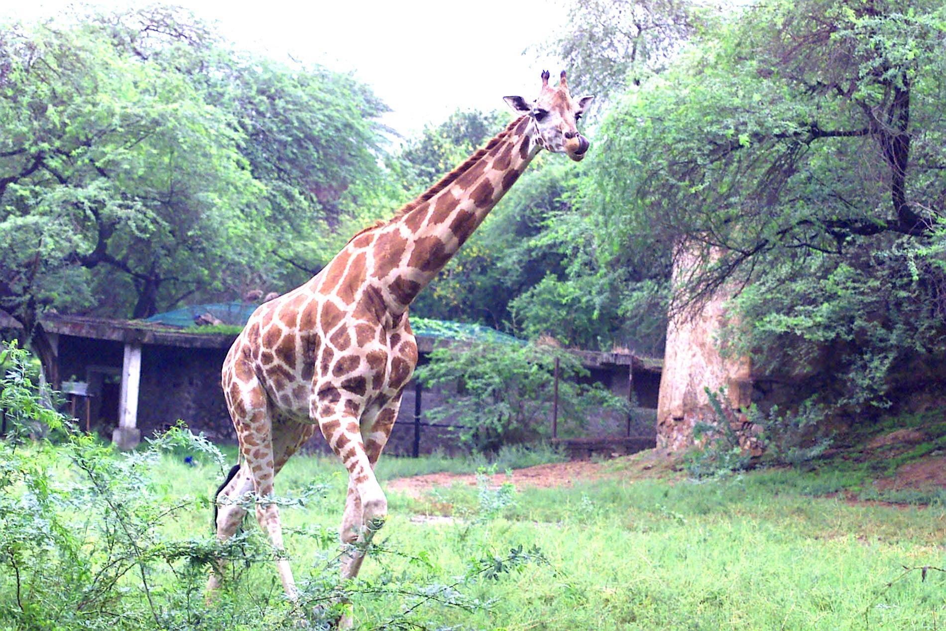 national zoological park delhi tourism