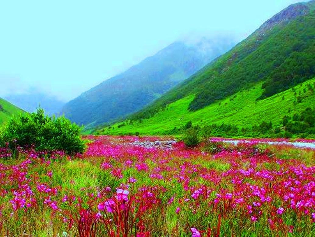 VALLEY OF FLOWERS Photos, Images and Wallpapers, HD Images ...