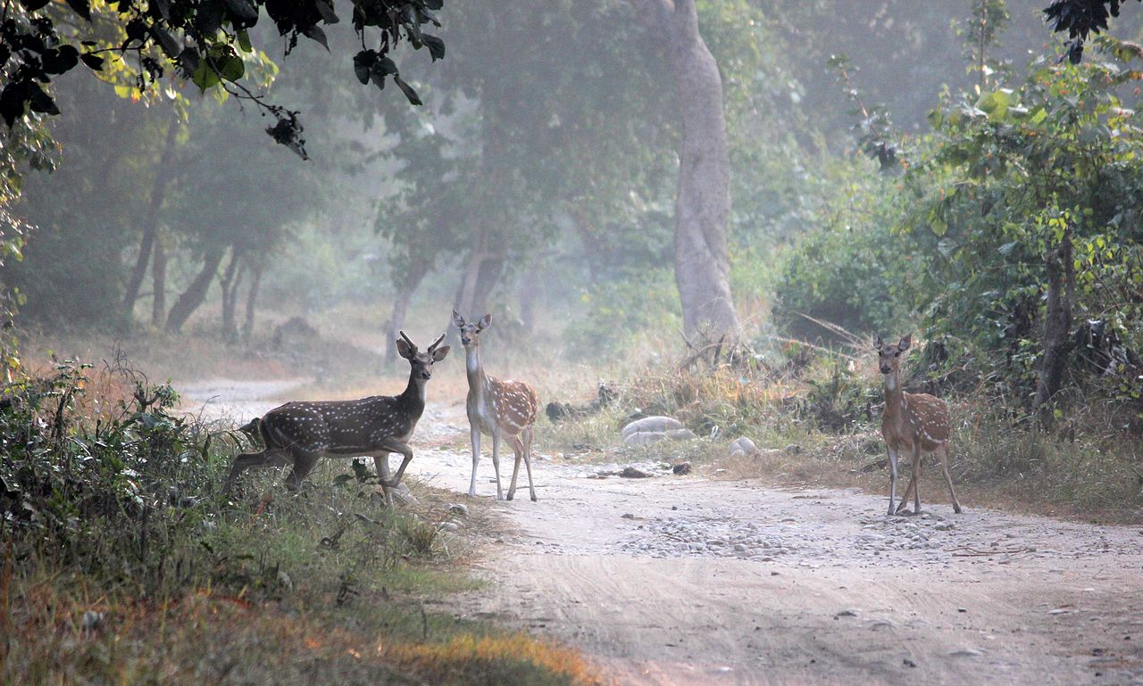 Jim Corbett National Park Photos Images And Wallpapers