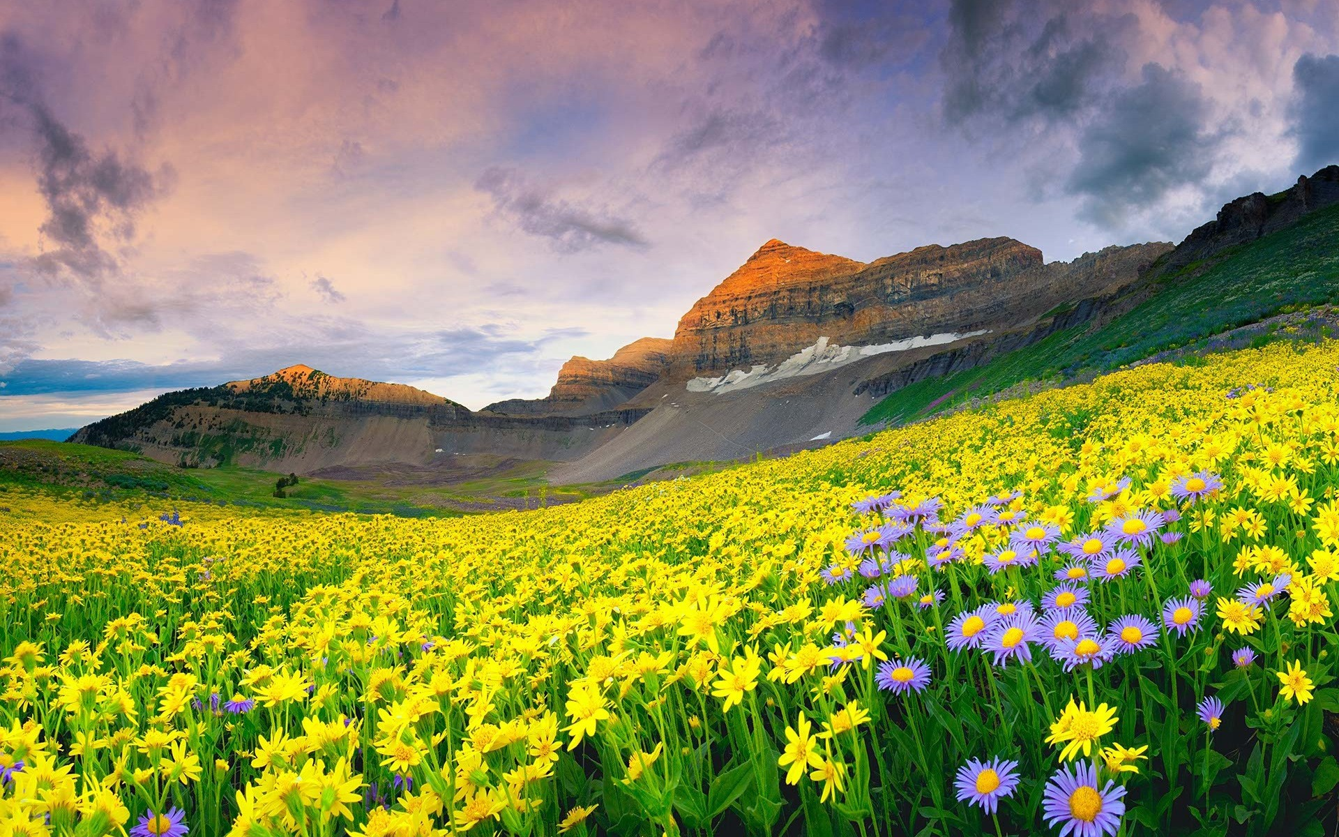 Valley Of Flowers Photos Images And Wallpapers Hd Images Near By