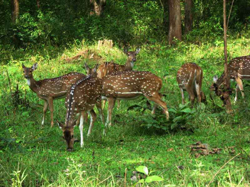 Bannerghatta national park in bangalore dating 5
