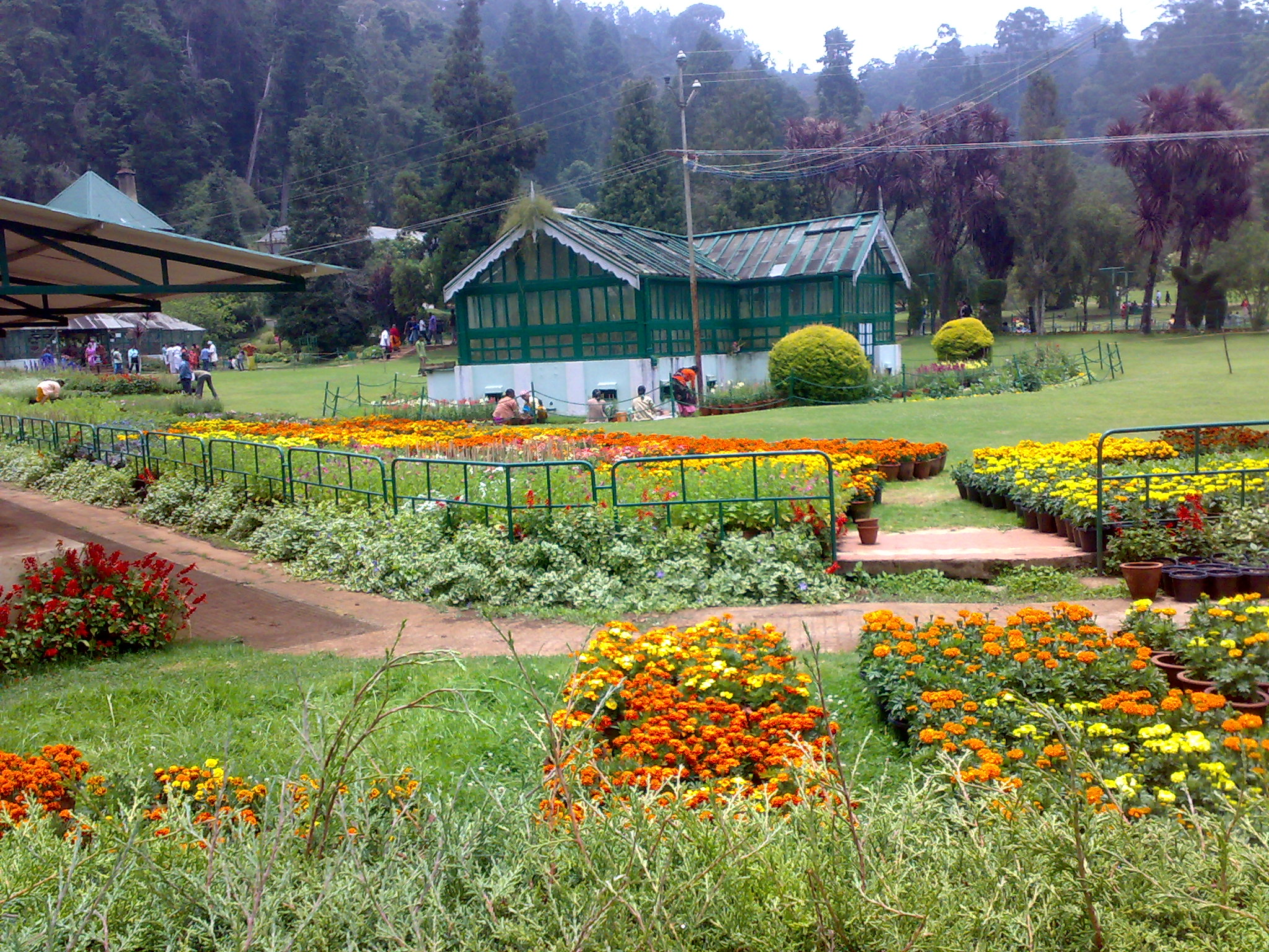 Botanical Garden Ooty India wallpapers Botanical Garden Ooty India