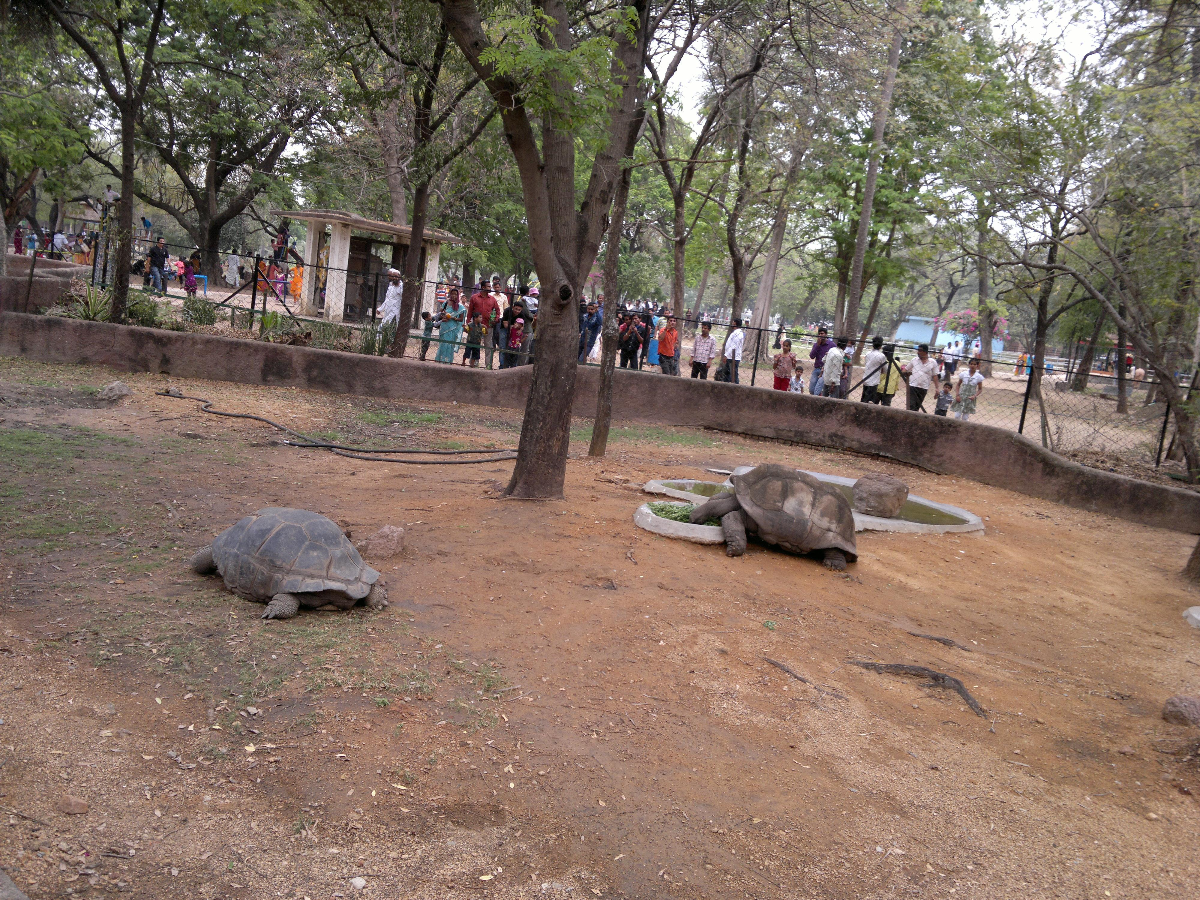 Hyderabad Zoo Photos Images And Wallpapers Hd Images Near By