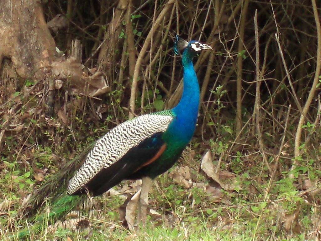 Bandipur National Park Image