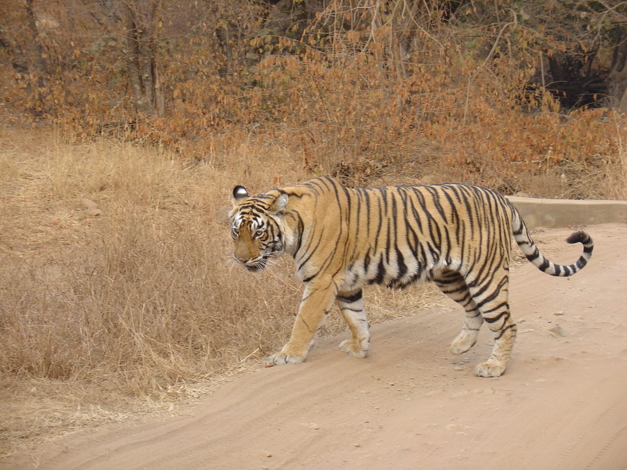 Palamu National Park Image