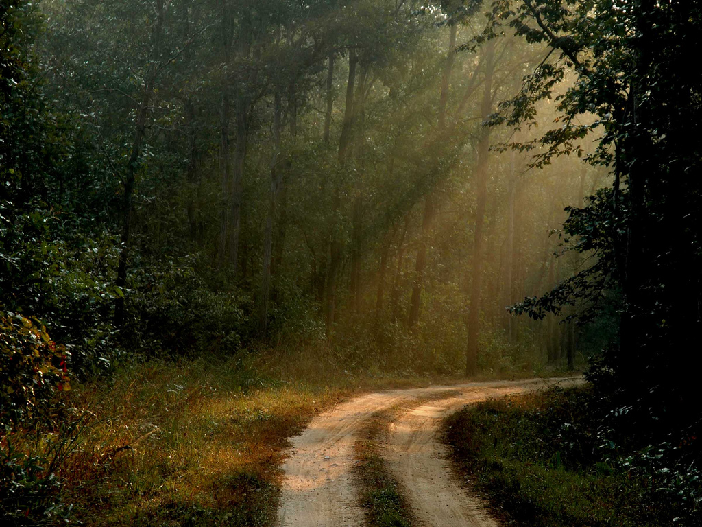 Kanha National Park Image