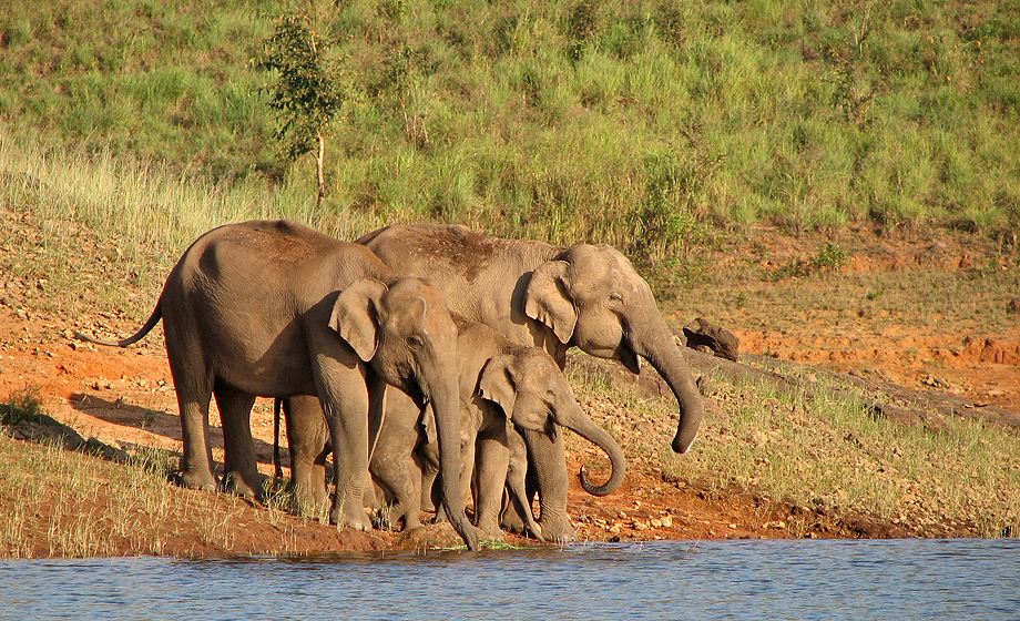 Sunderbans Wildlife Sanctuary Image