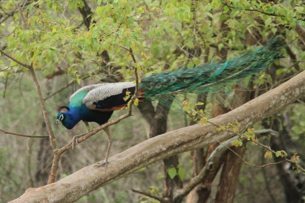 Mudumalai Wildlife Sanctuary Image