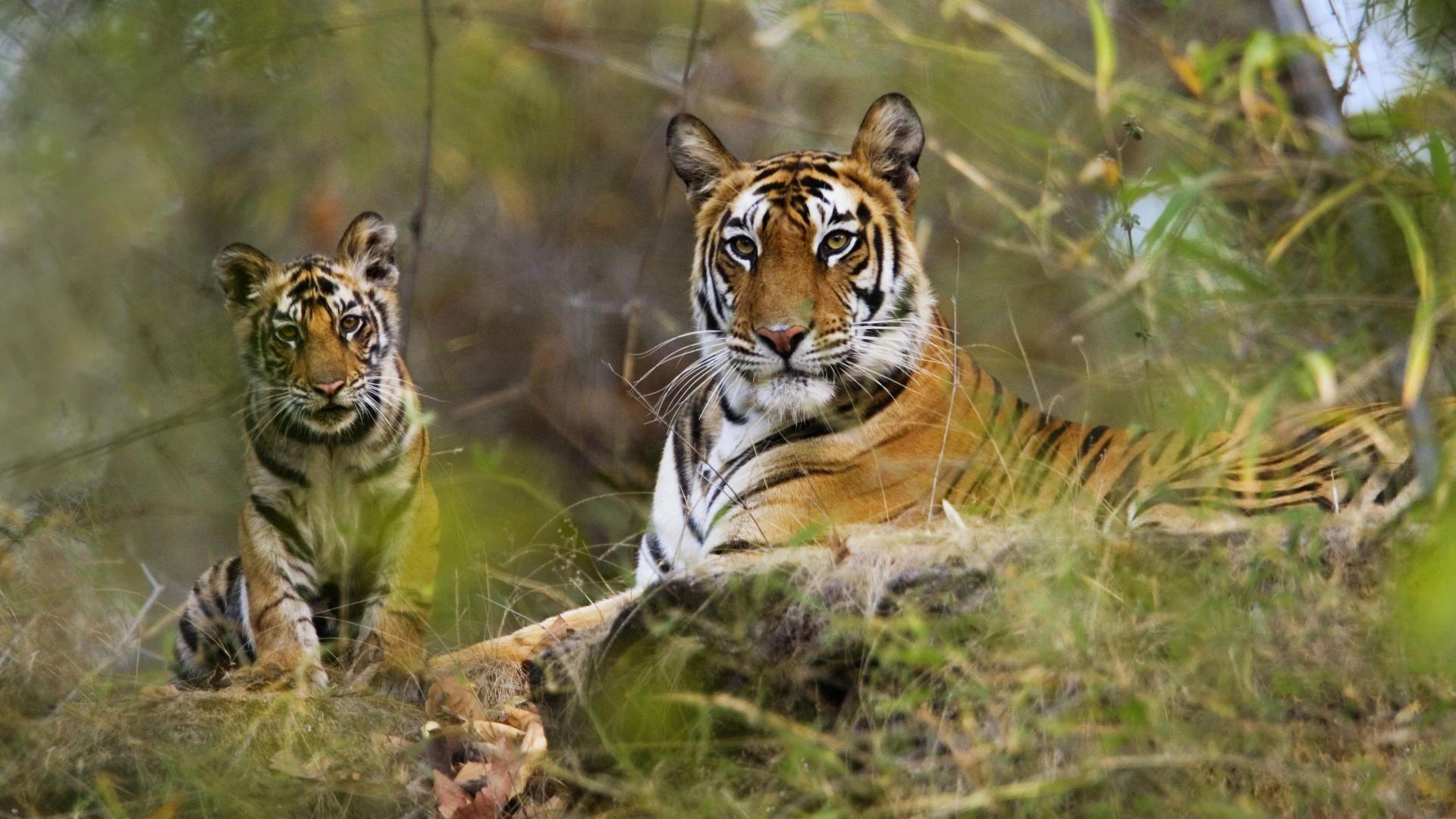 Bandhavgarh National Park Image