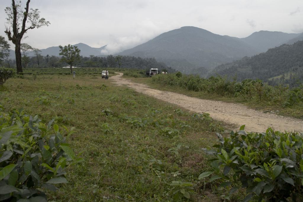 Gorumara National Park Image