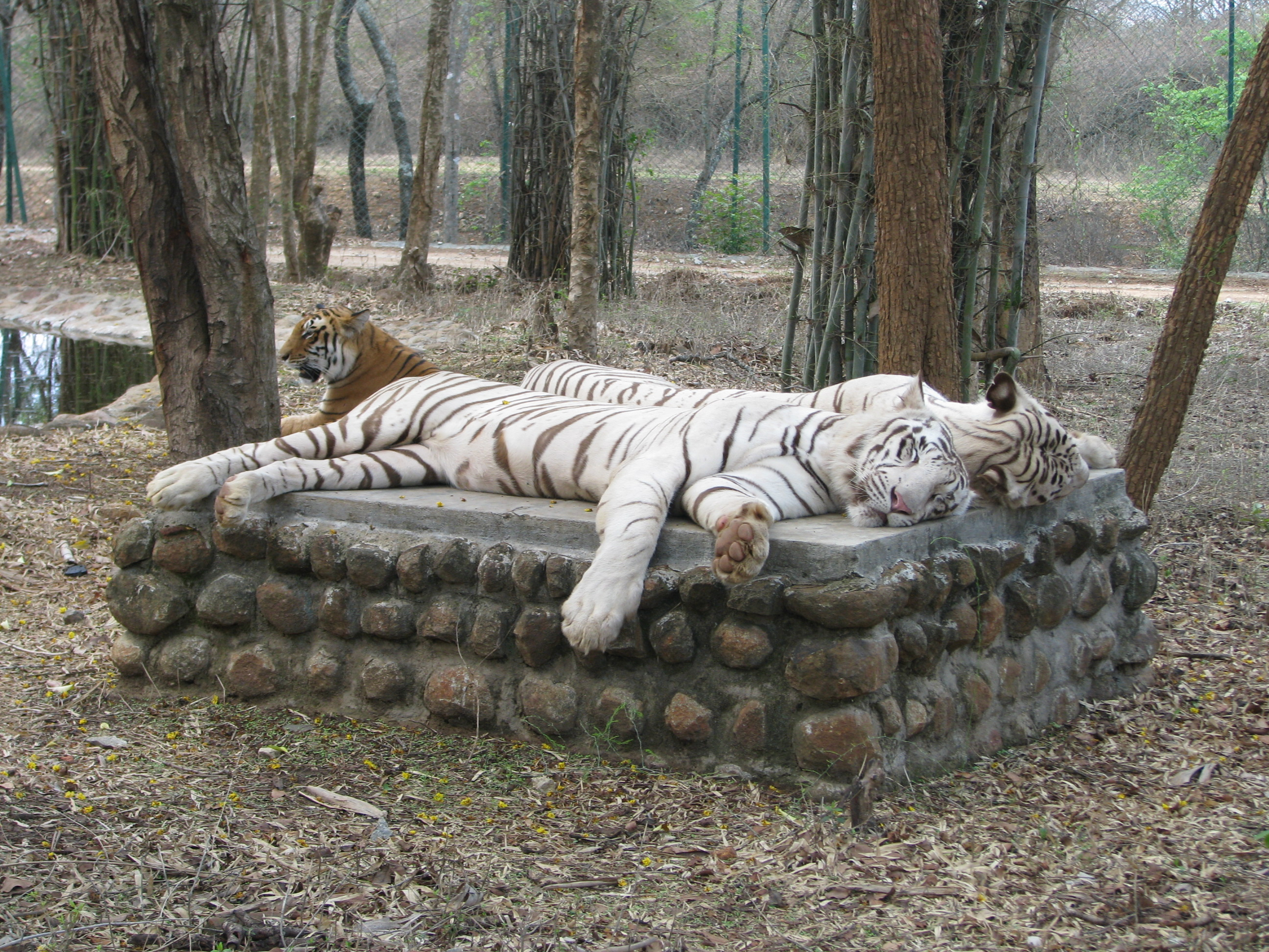 Bannerghatta national park in bangalore dating 8