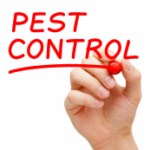 Tips on Pest Control Image