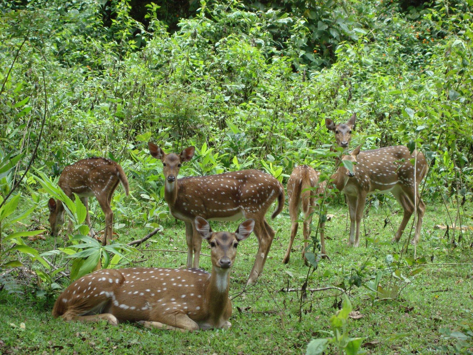 BRT Wildlife Sanctuary Image