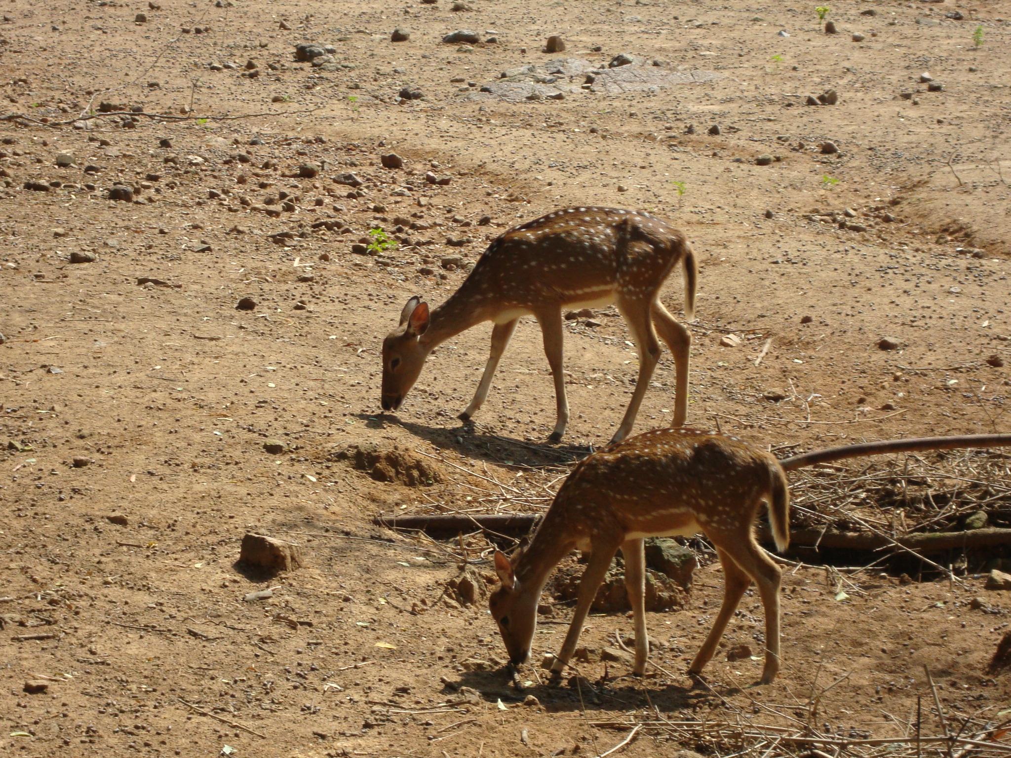 Arignar Anna Zoological Park Image