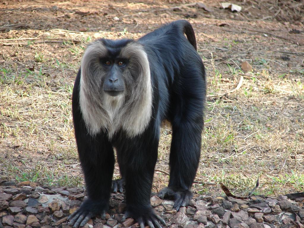 Nandan Kanan Zoo Image