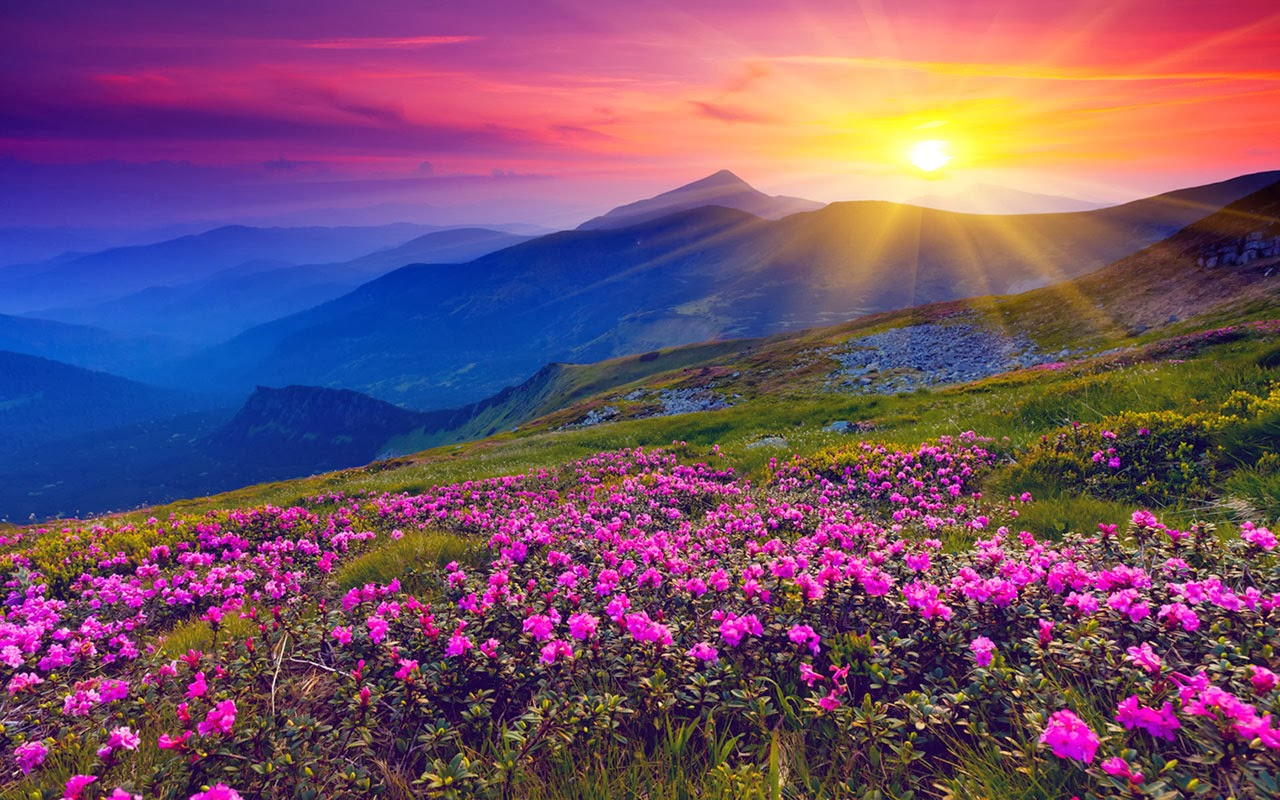 Valley of Flowers Image