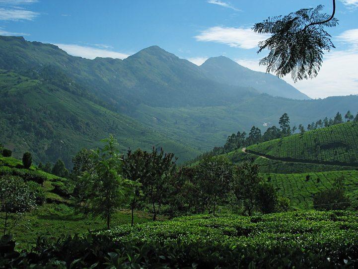 General Tips on Nilgiri Hills Image
