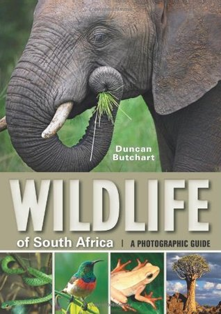Wildlife of South Africa - Art Publishers Image