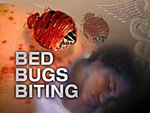 Bug Buster - Bed Bug Treatment Image