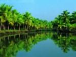 Tourkerala - Cochin  Image