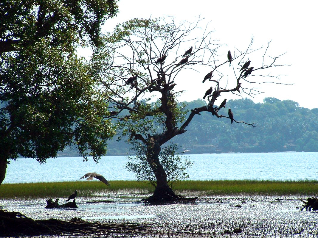 Salim Ali Bird Sanctuary Image