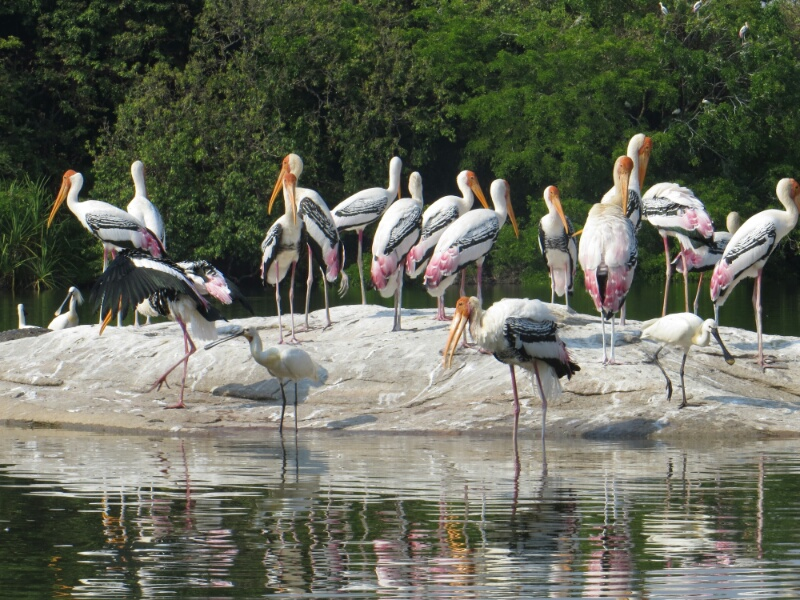 Ranganathittu Bird Sanctuary Reviews Ranganathittu Bird