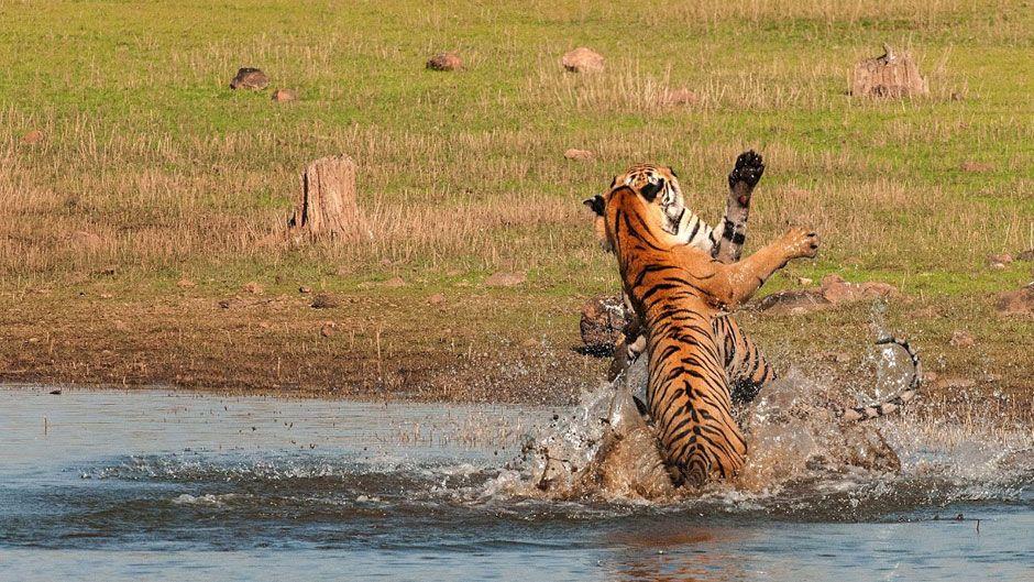 Tadoba Andhari Tiger Reserve Image