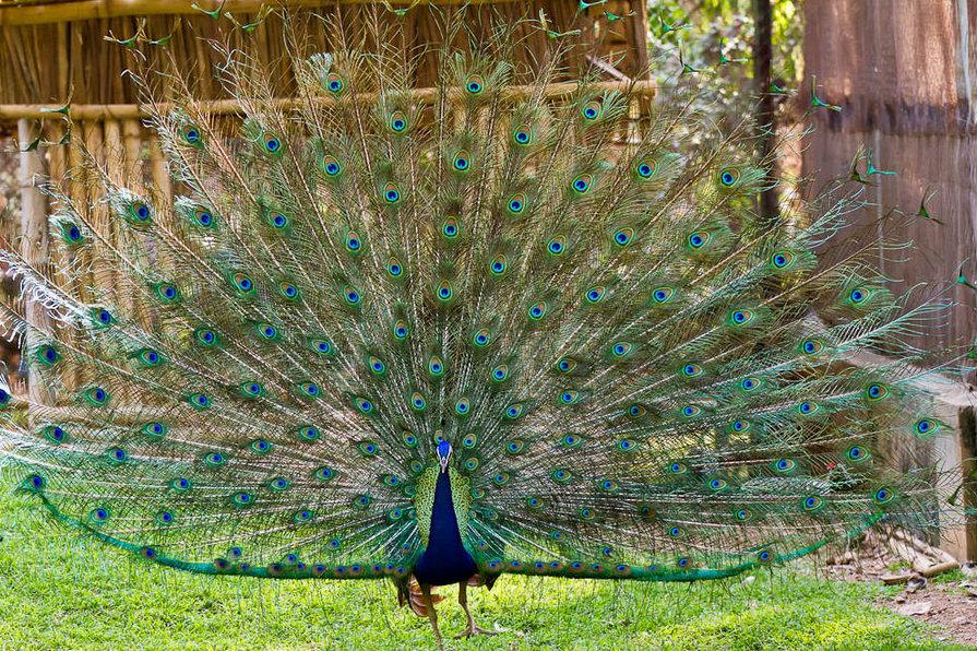 Mysore Zoo Image