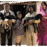Peepli Live Image