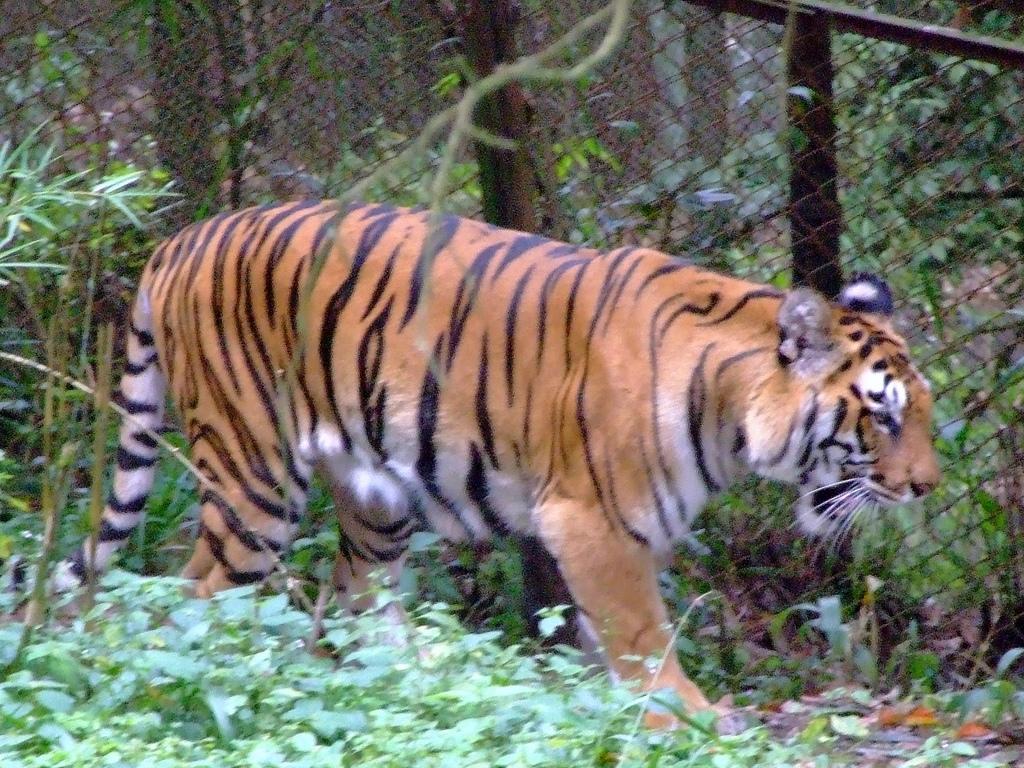 Padmaja Naidu Zoological Park - Darjeeling Image