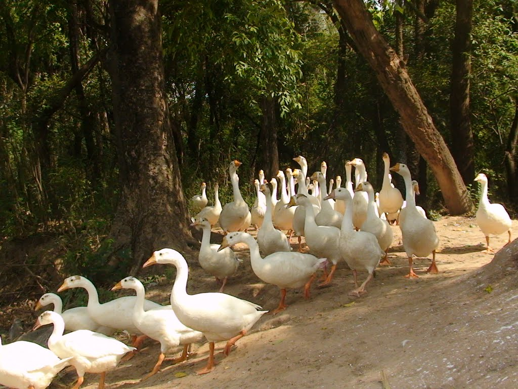 Chhatbir Zoo Image