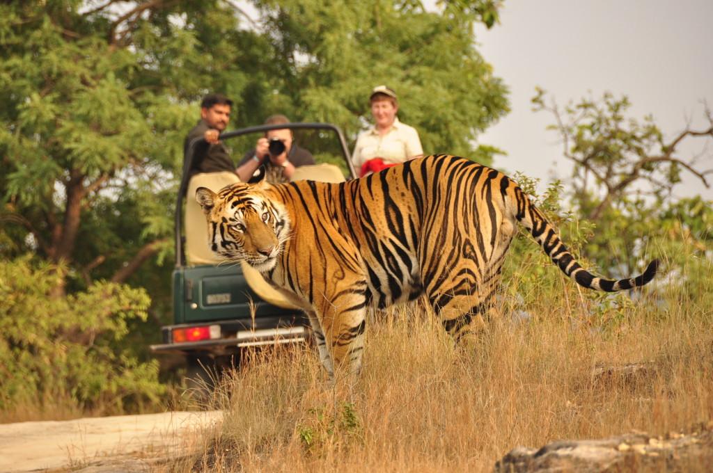 Ranthambore Jeep Safari Image