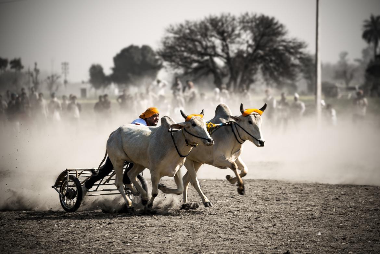Kila Raipur Image