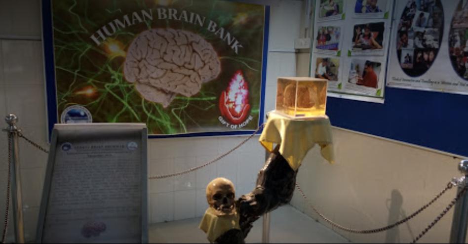 NIMHANS Brain Museum - Bangalore Image