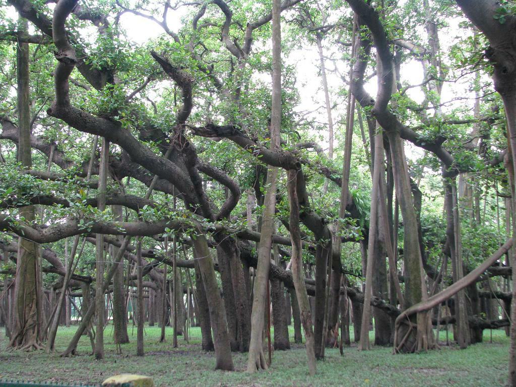 Acharya Jagadish Chandra Bose Indian Botanic Garden - Howrah Image