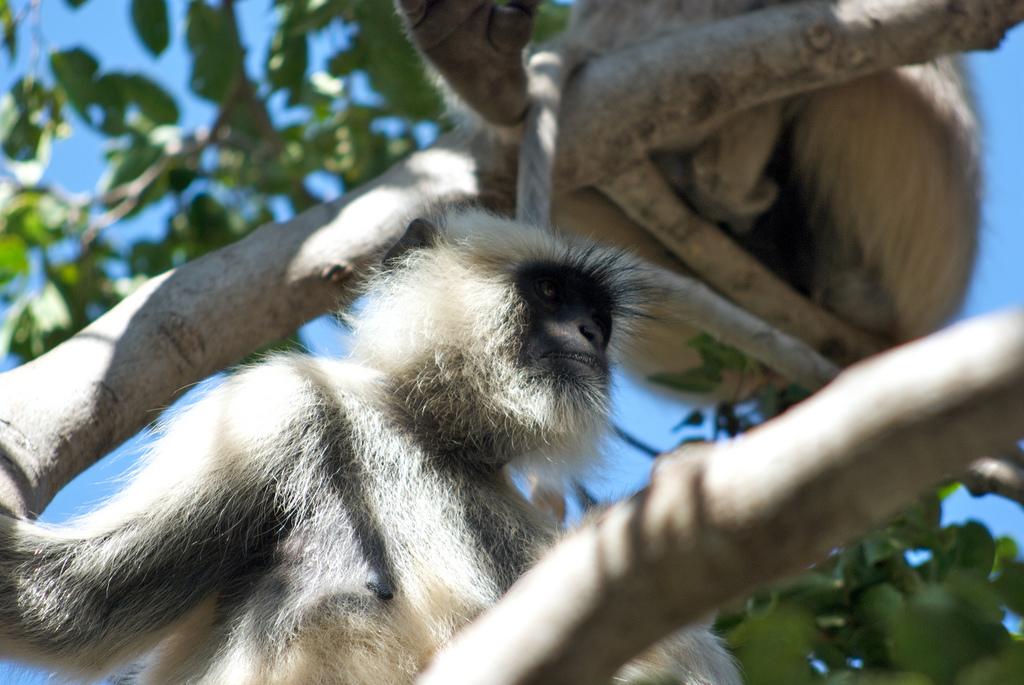 Fakim Wildlife Sanctuary - Zunheboto Image