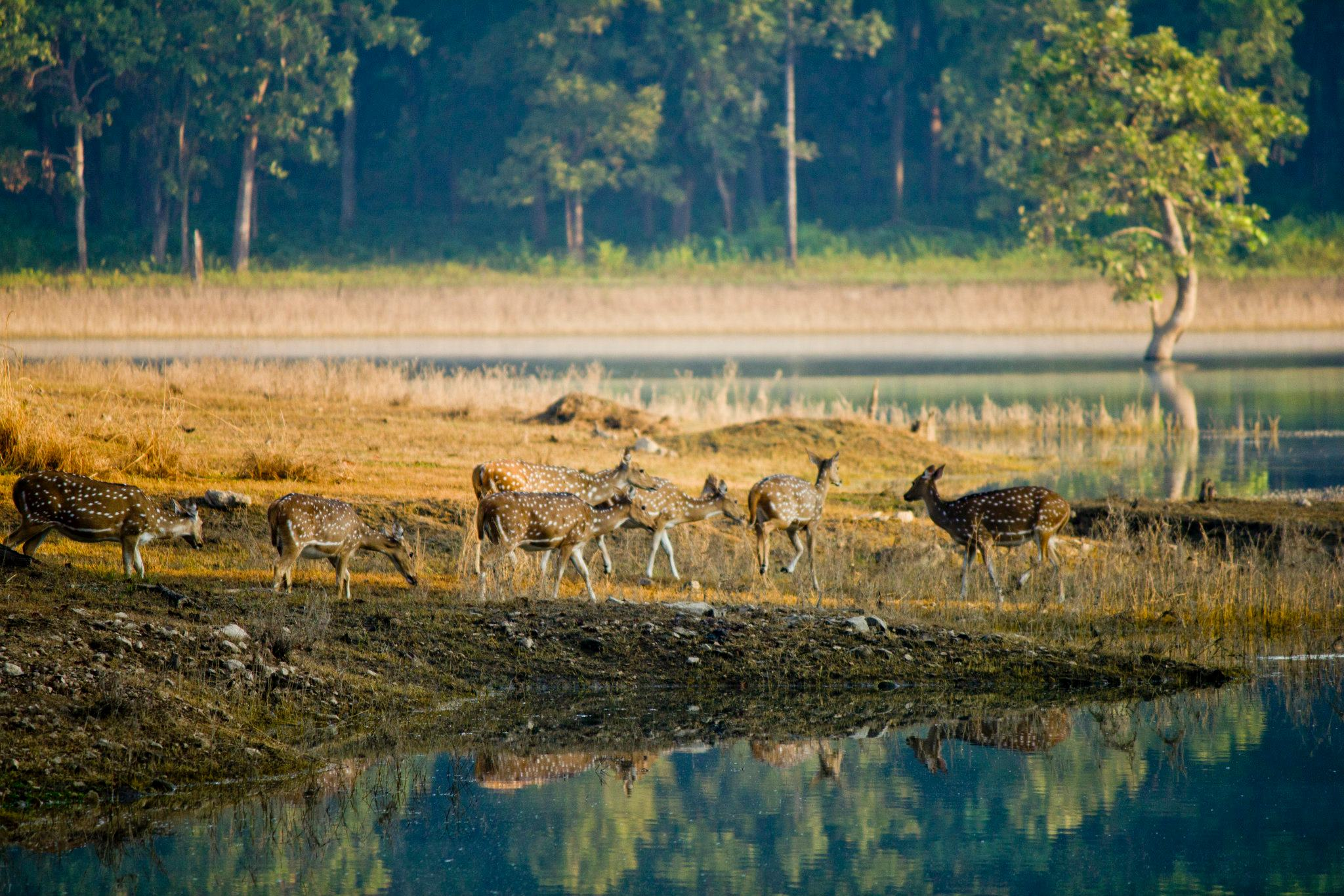 Pench National Park - Pench Image