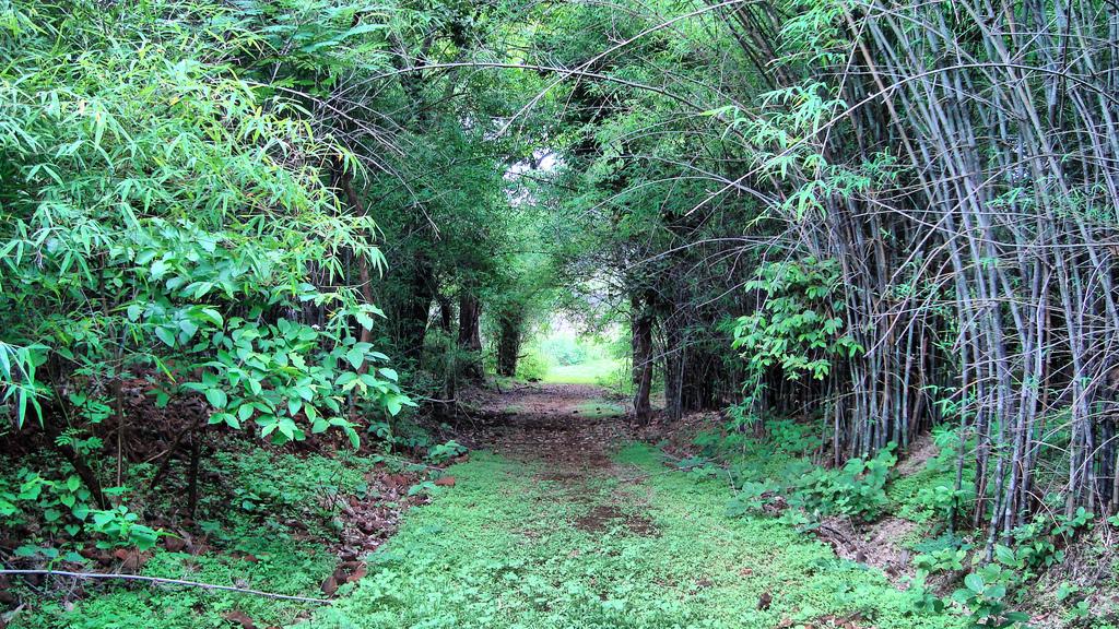 Dumma Nature Reserve - Jabalpur Image