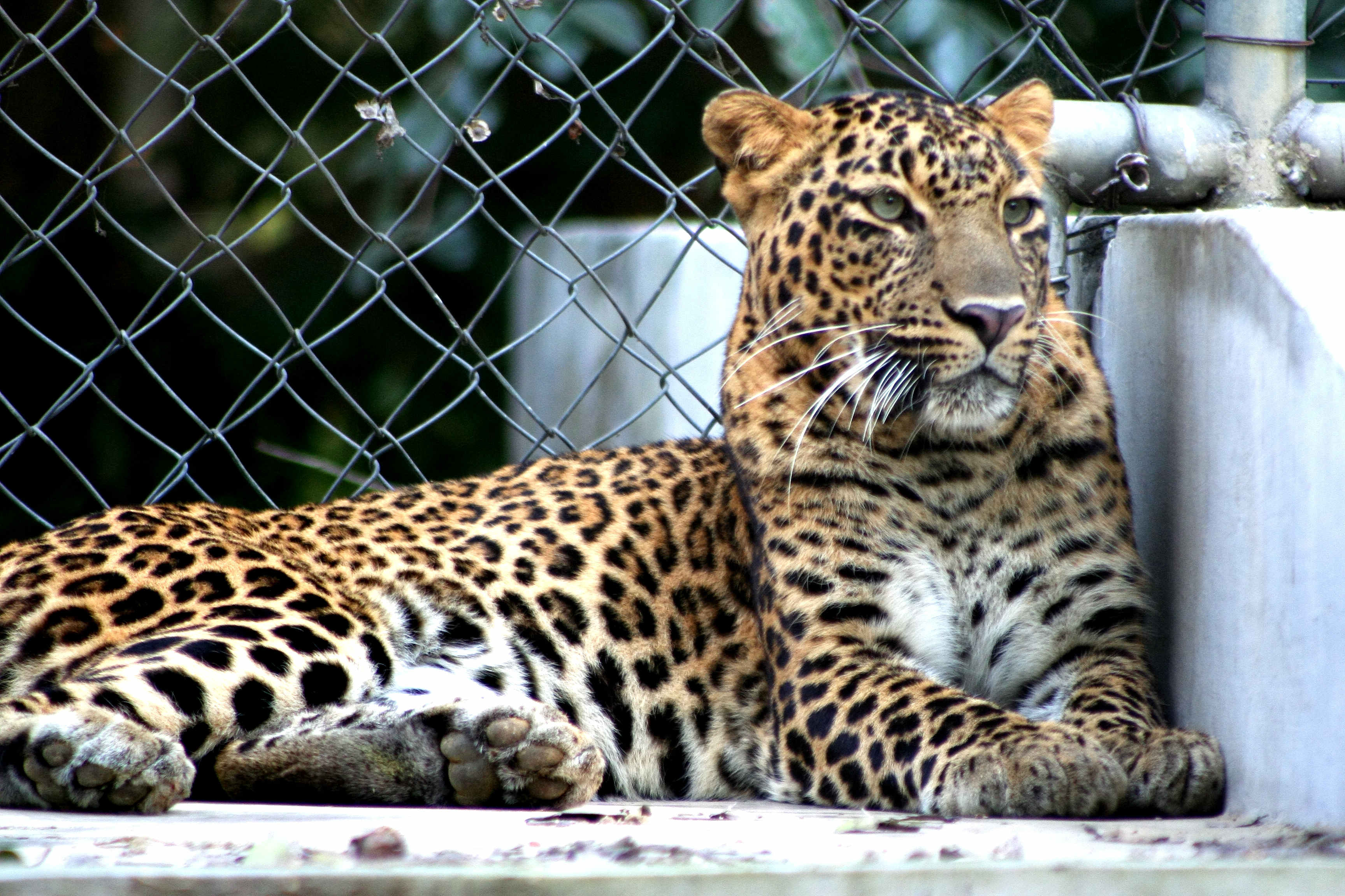 Allen Forest Zoo - Kanpur Image