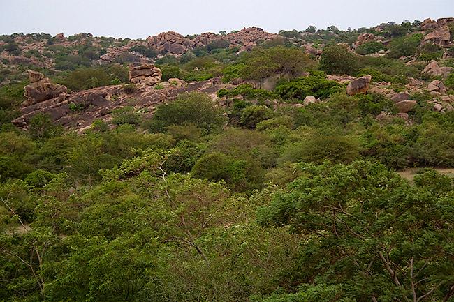 Gunda Forest - Bellary Image