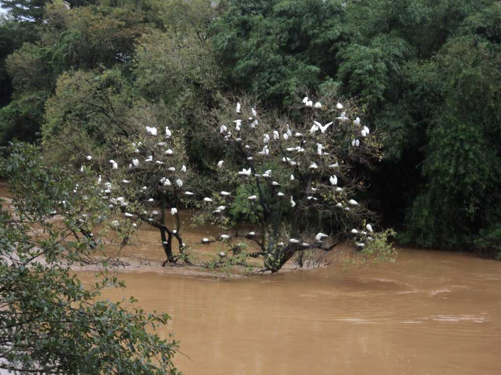 Mandagadde Bird Sanctuary - Shimoga Image