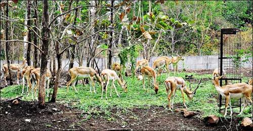 Rajiv Gandhi Zoological Park - Katraj - Pune Image