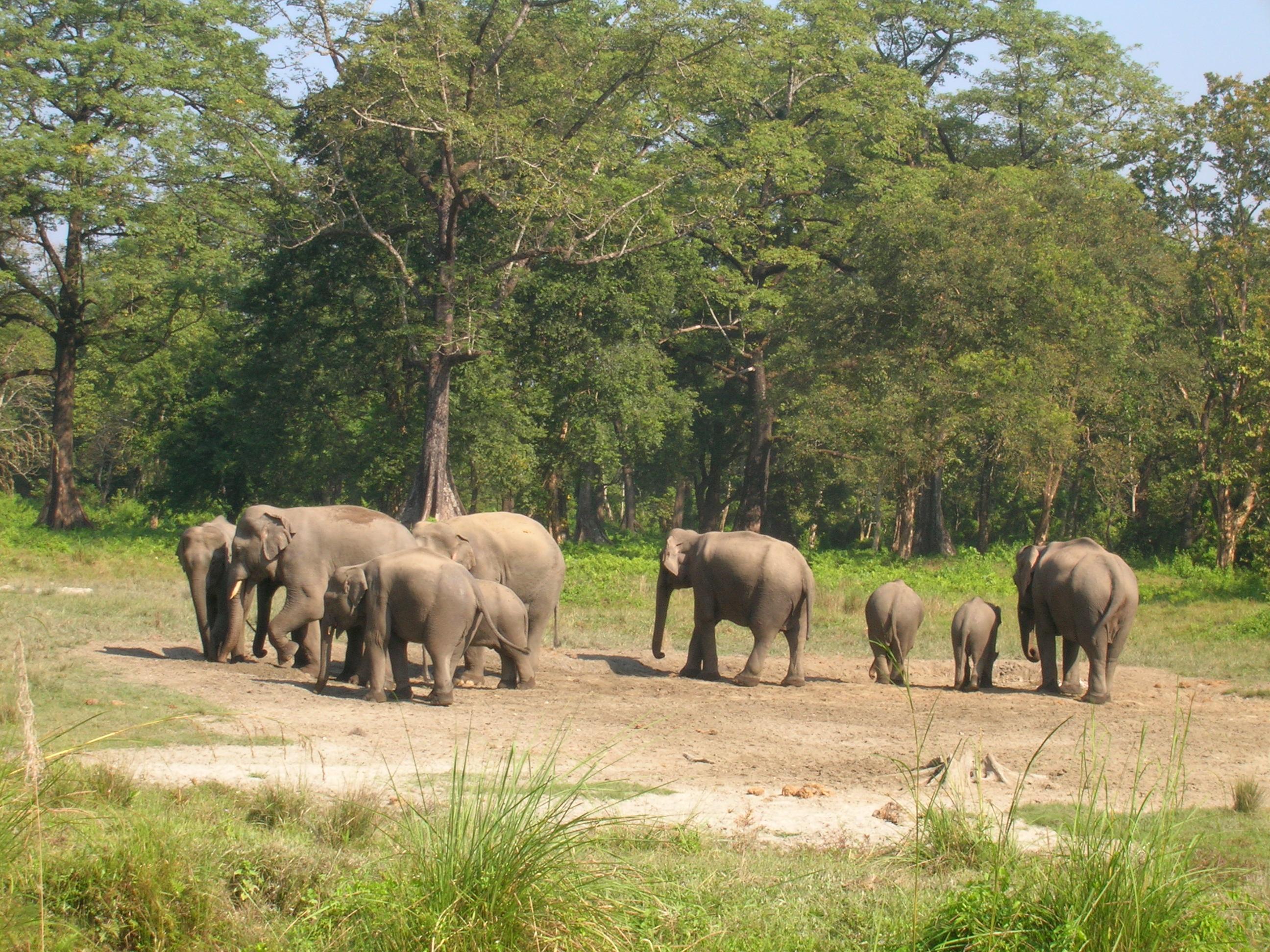Jaldapara National Park Image