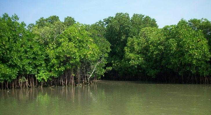 Sundarbans Image