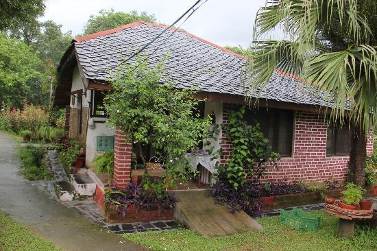 Darang Tea Estate - VPO Darang - Kangra Image